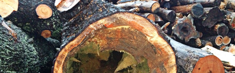 Todd Cambra Certified Arborist - Tree Removal Experts ...