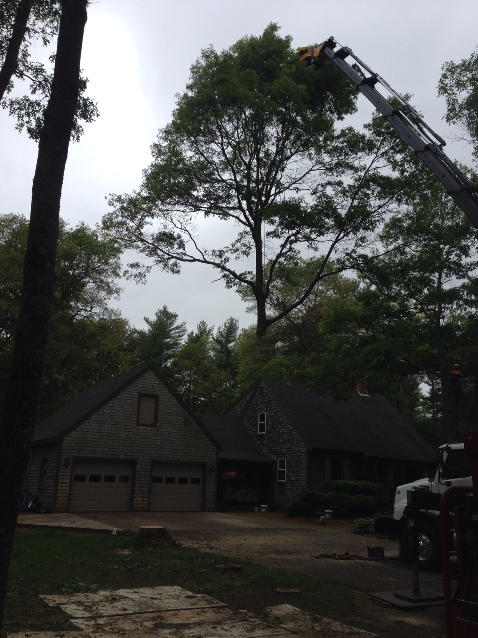 Todd Cambra Certified Arborist Photo Gallery | East ...
